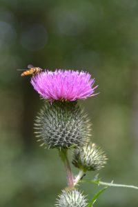 Behandlung mit Phytotherapie und Homöopathie